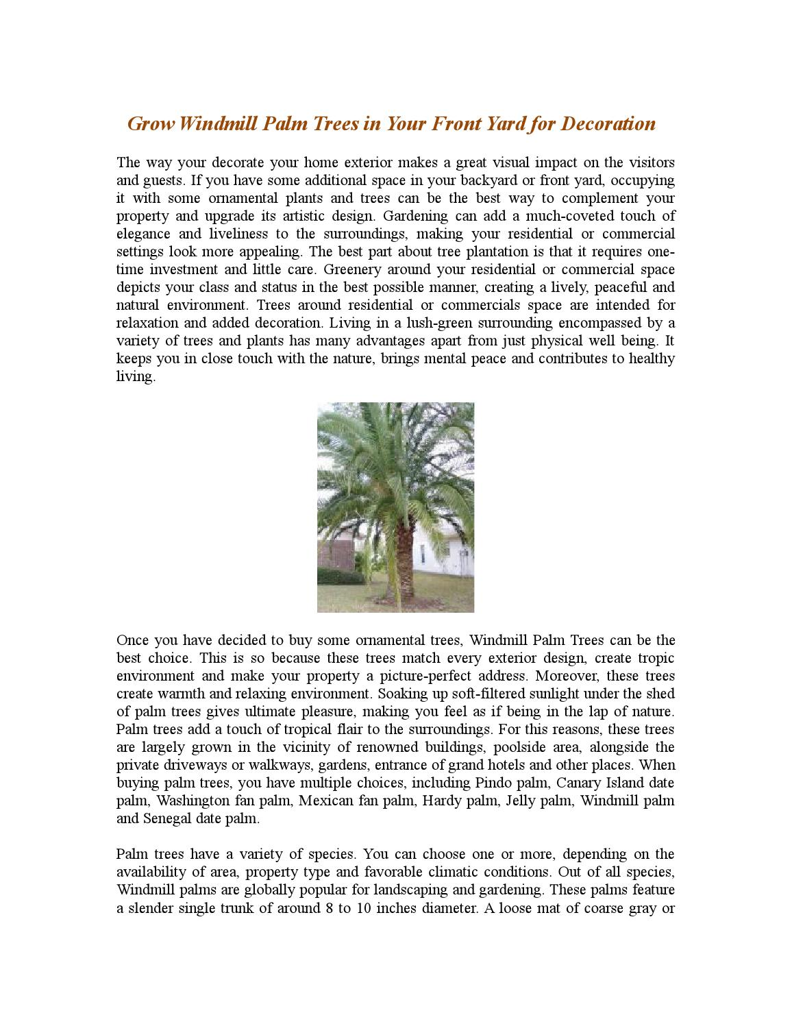 Grow windmill palm trees in your front yard for decoration by ...