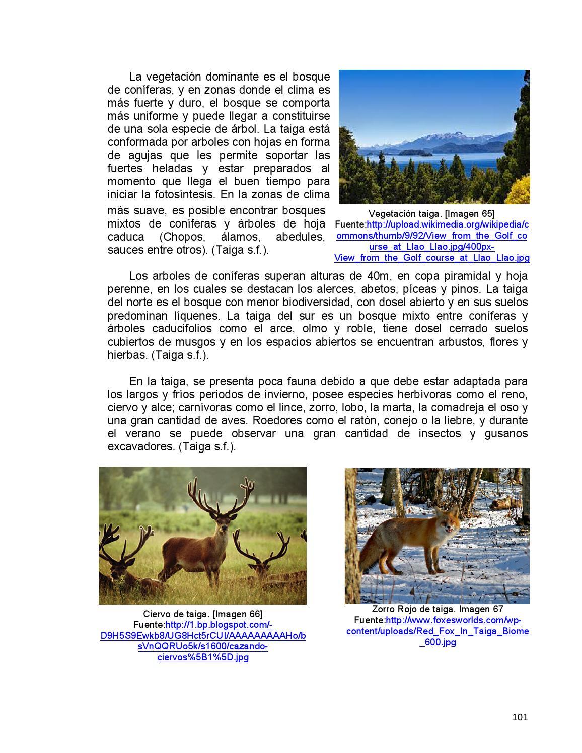 Tesis 0410 i c by maosabo issuu for Diferencia entre arboles de hoja caduca y hoja perenne