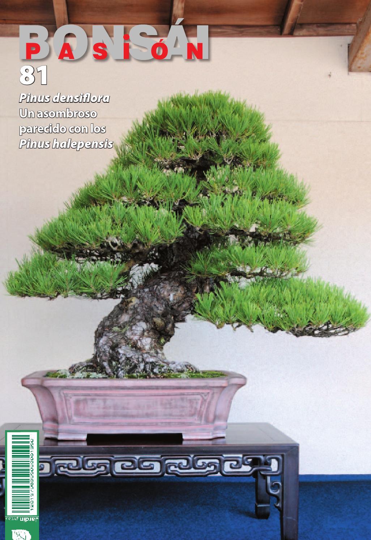 Bons i pasi n 81 by jardin press issuu for Oficina 3058 cajamar