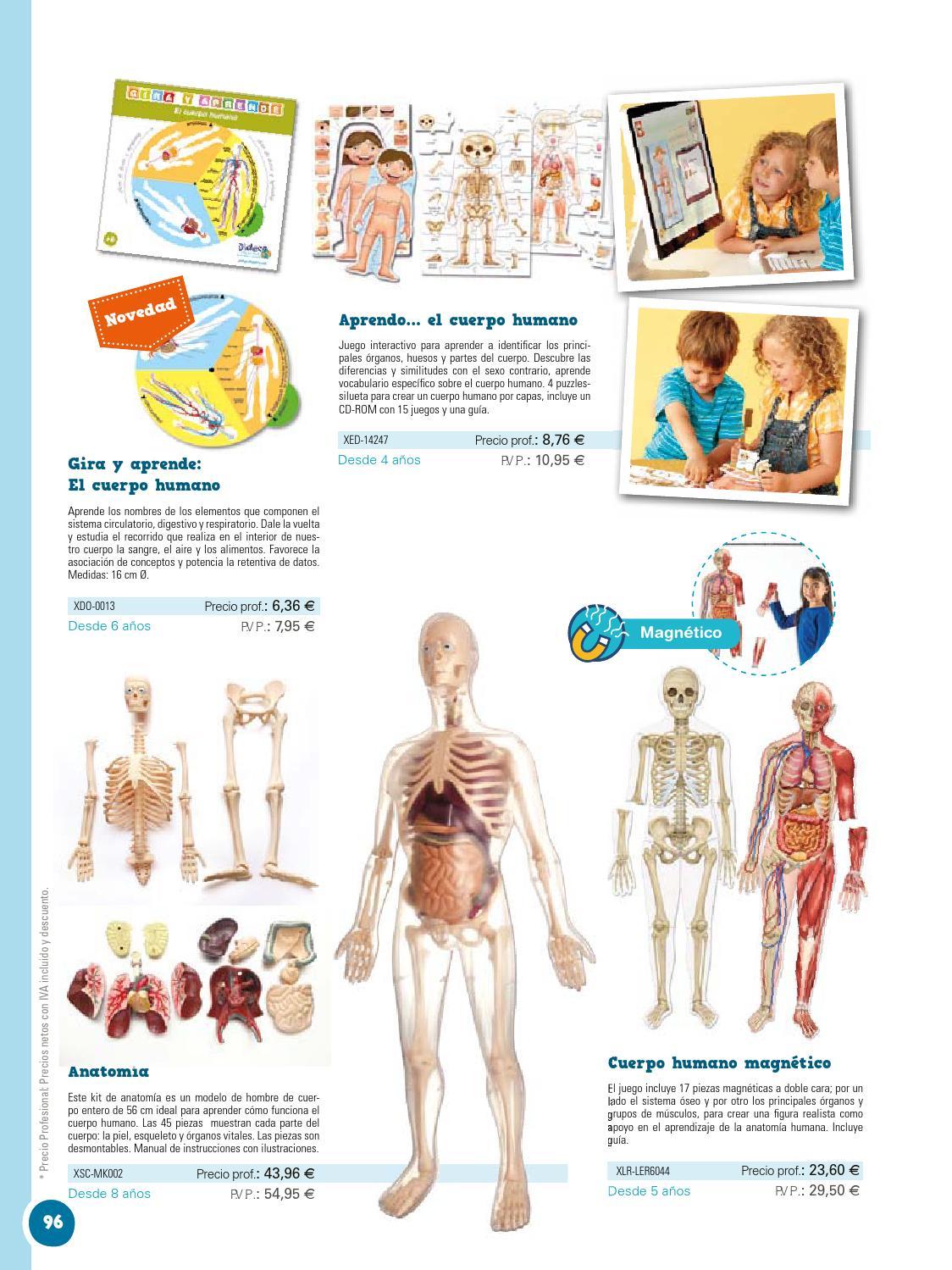 Contemporáneo Anatomía De Los órganos Vitales Embellecimiento ...