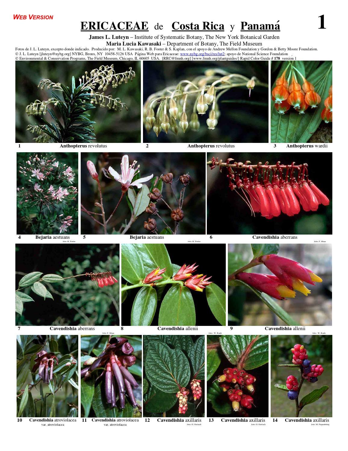 plantas de ericaceae y vaccinium costa rica by marco