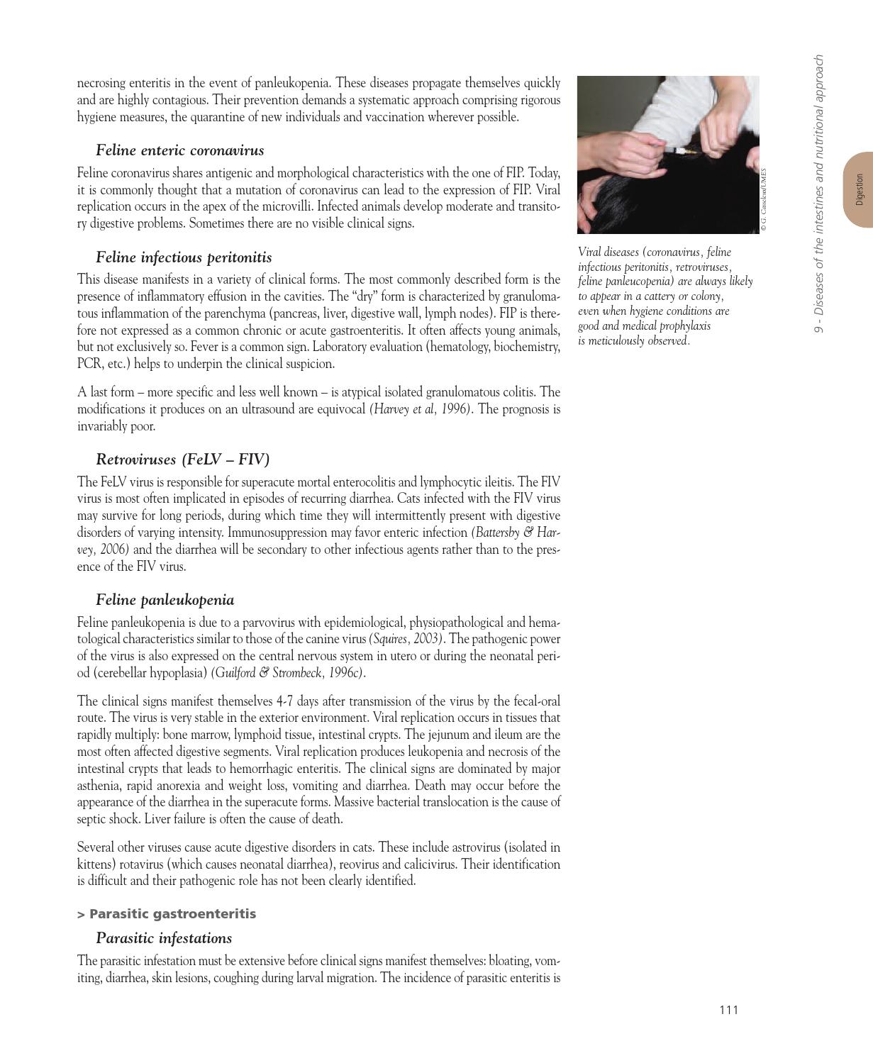 Encyclopedia Of Feline Clinical Nutrition 1 By Corecph Issuu