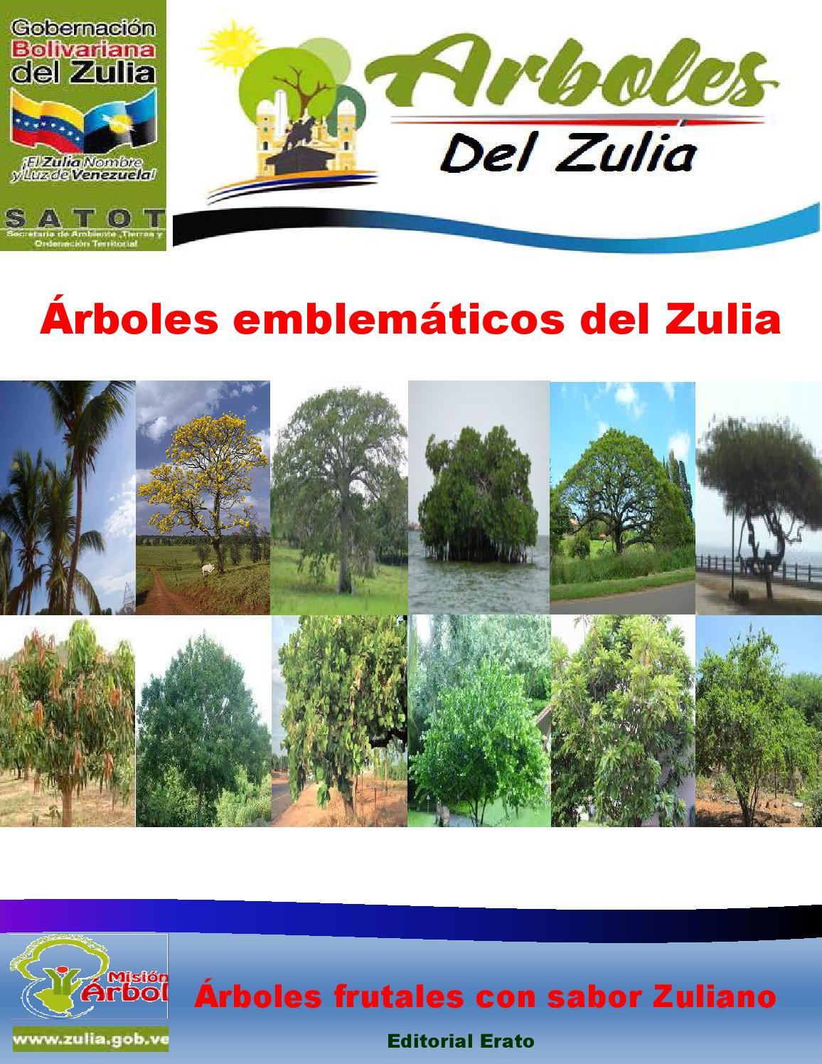 Rboles emblem ticos del zulia by secretaria de ambiente for Arboles con sus nombres y caracteristicas