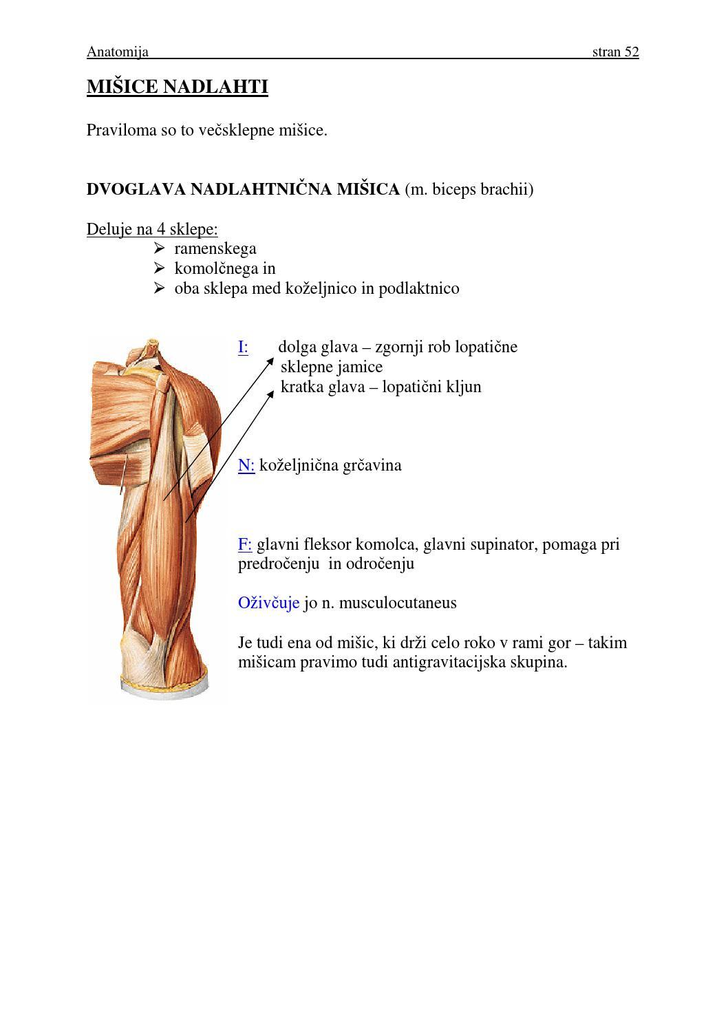 Beste Vertebrobasilären System Anatomie Galerie - Menschliche ...