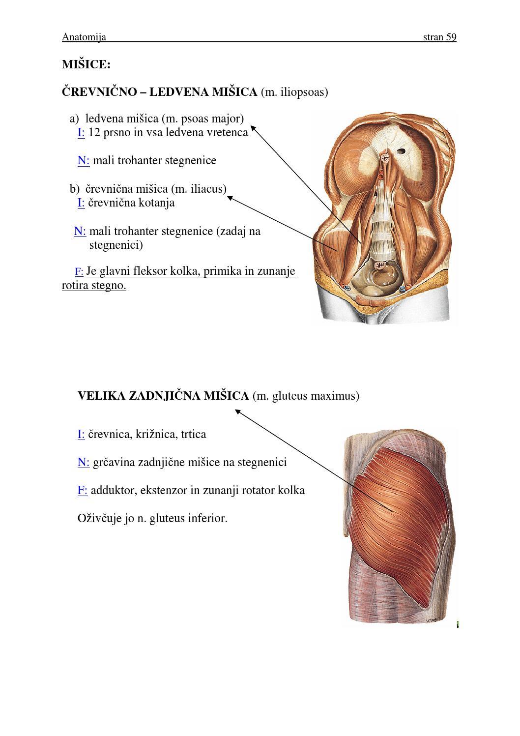 Ausgezeichnet Middlesex County College Anatomie Und Physiologie ...