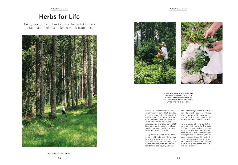 Mushroom Magazine Pdf