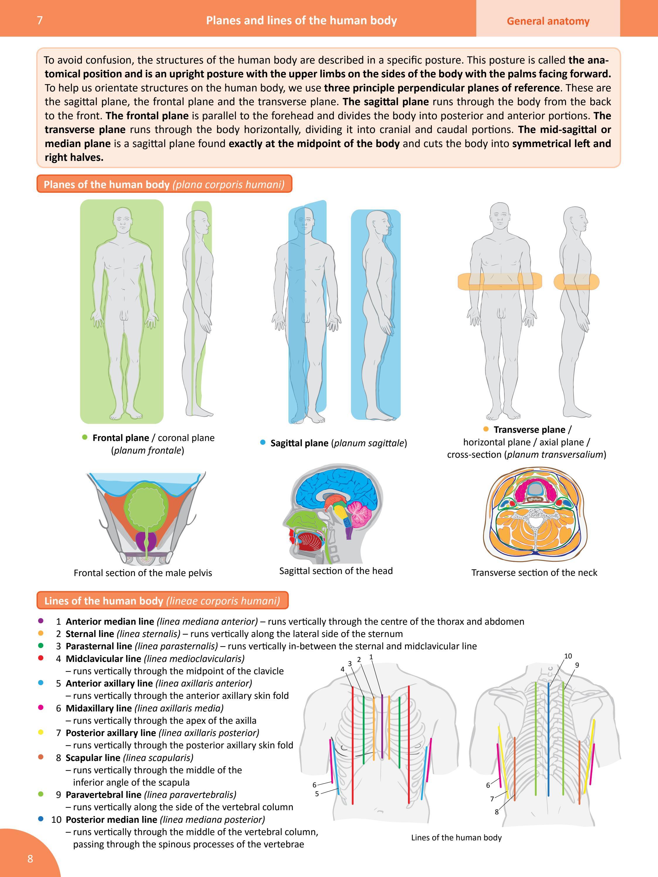 Memorix Anatomy Sample 134 Pages By Radovan Hudak Issuu