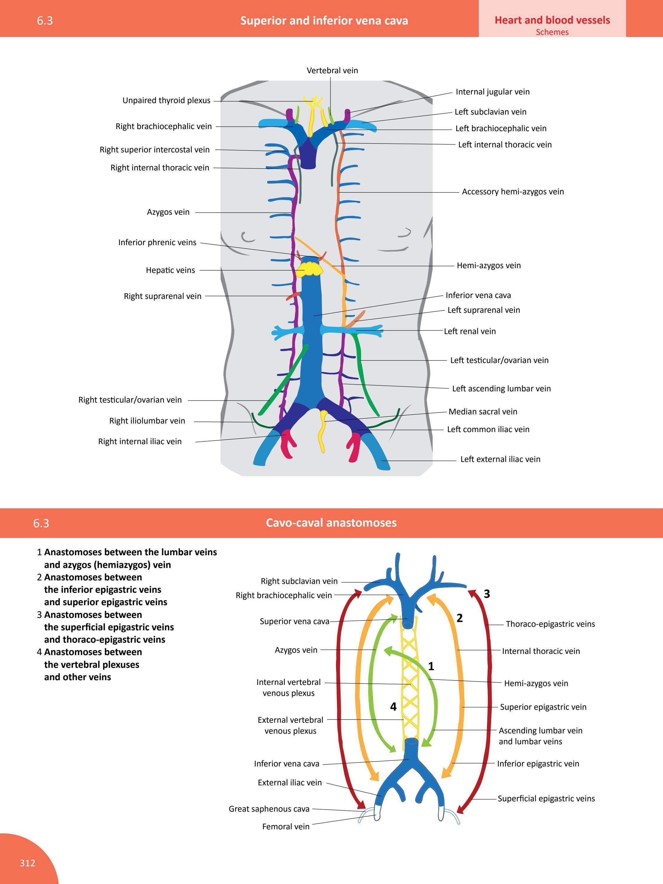 memorix anatomy - sample  134 pages  by radovan hudak