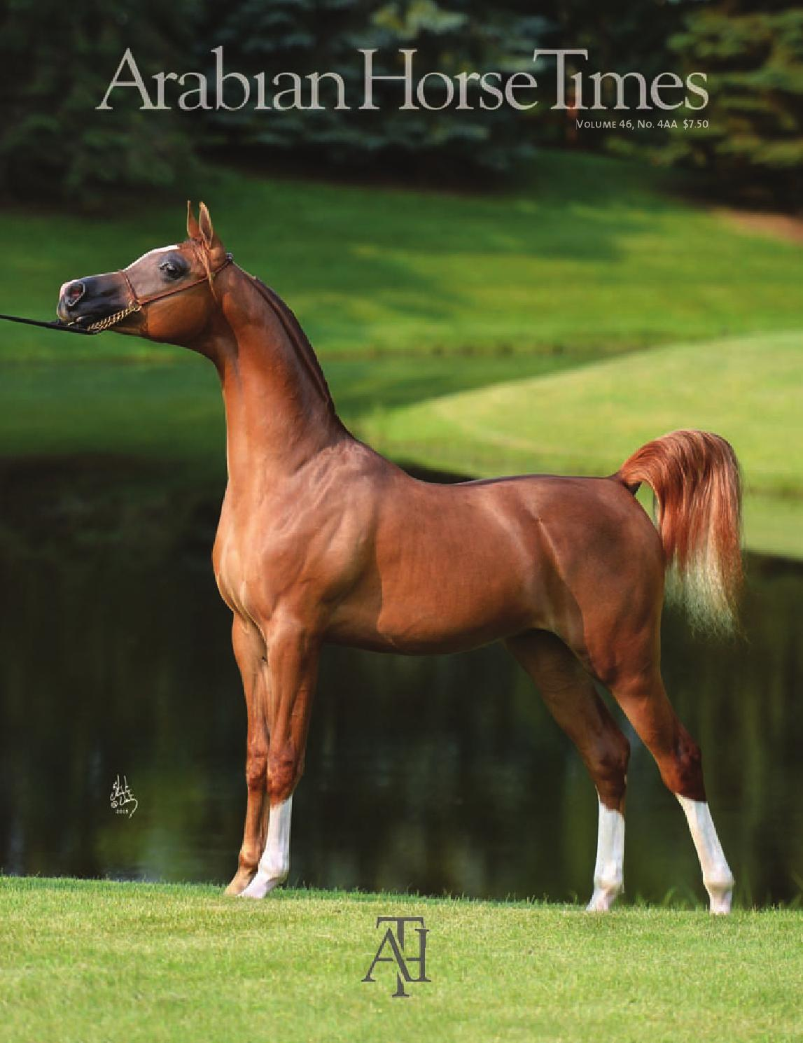 Arabian Horse Times Vol 46 No 4aa By Arabian Horse Times Issuu