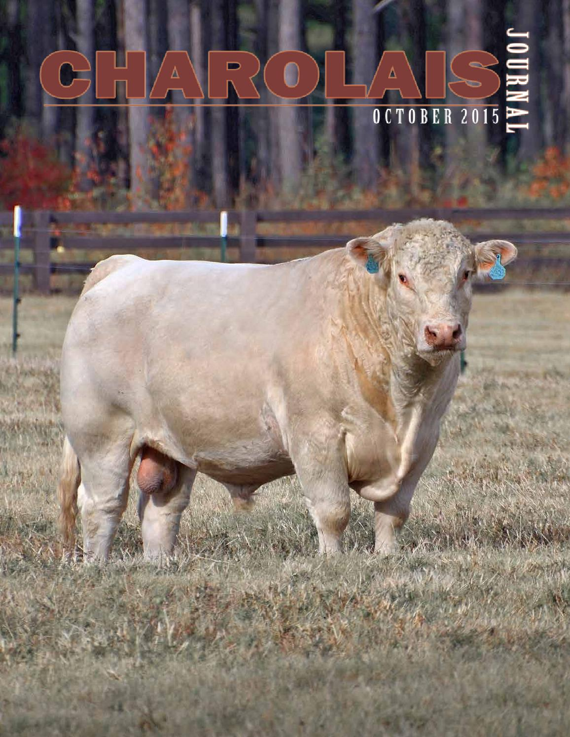 october 2015 charolais journal by edje issuu