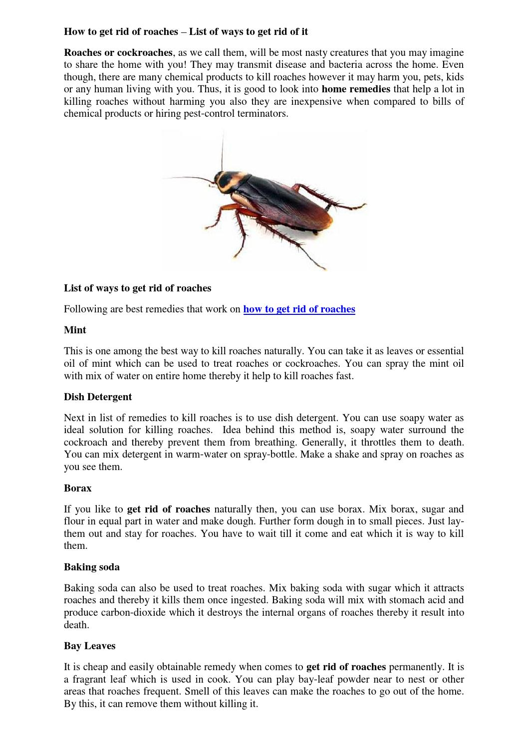 How to get rid of roaches list of ways by juliesamuel - issuu