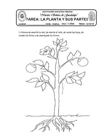 Tarea La Planta Y Sus Partes By Katy Hormiguita Issuu