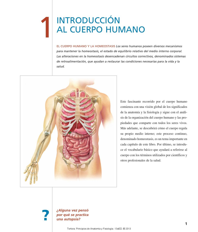 Partes de el cuerpo humano by alejandro - issuu