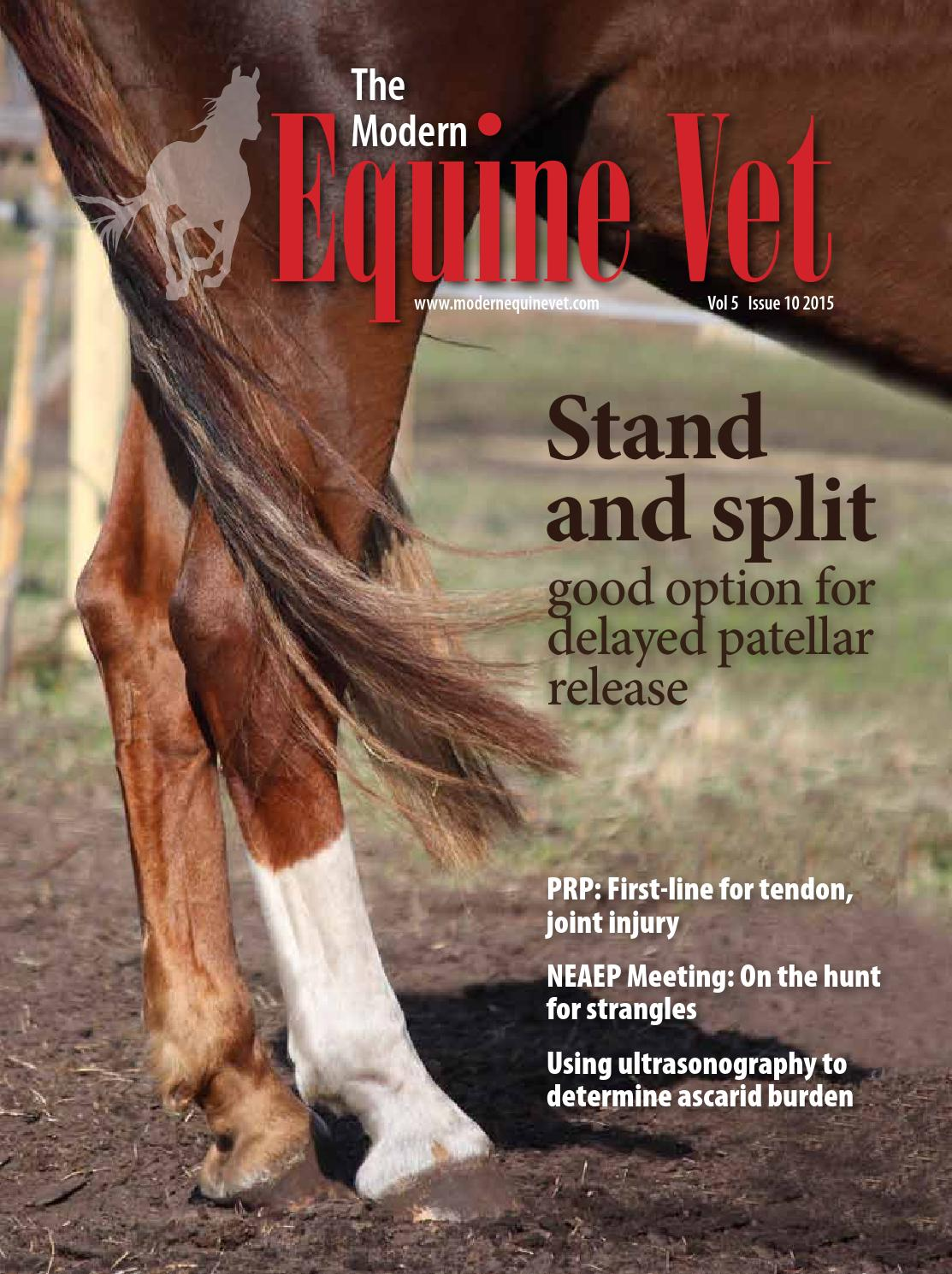 how to become an equine vet in quebec