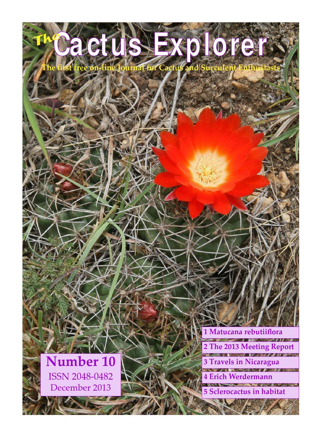 50 graines Agave utahensis ssp utahensis seeds succulents F