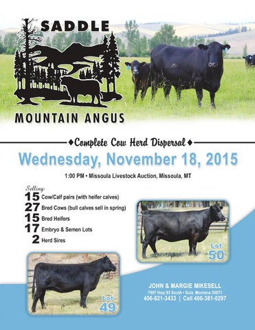 Saddle mtn angus 2015 female catalog