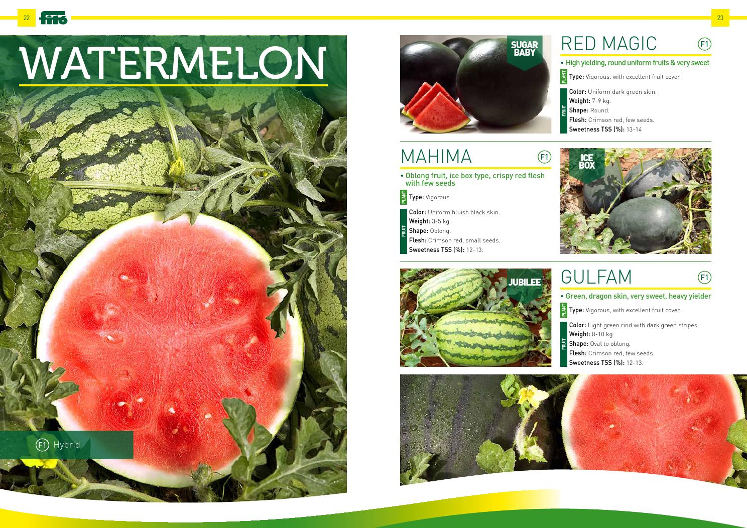 Professional Seeds India By Semillas Fit Issuu Fito Green Ecer