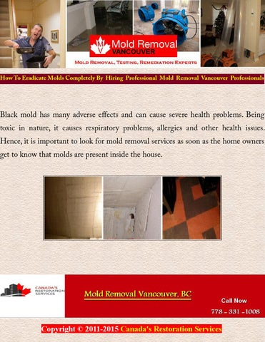 How To Eradicate Molds Completely By Hiring Professional Mold Removal Vancouver Professionals