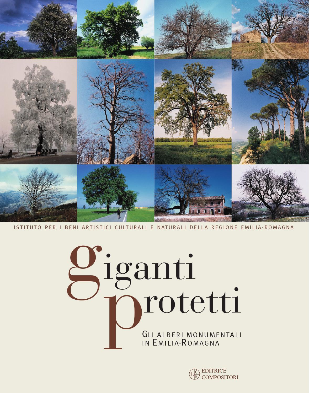 Periodo Migliore Per Potare Quercia giganti protetti. gli alberi monumentali in emilia-romagna