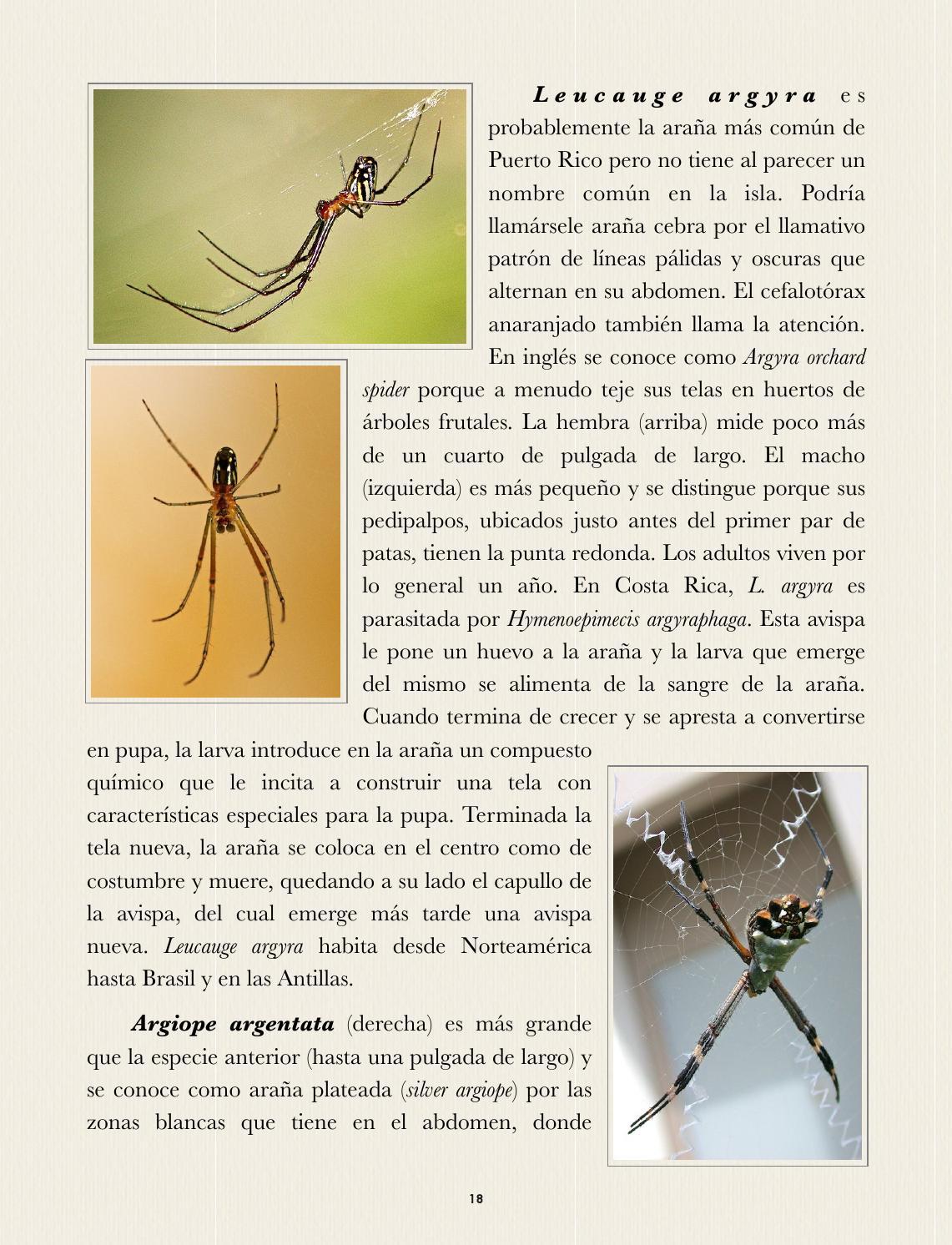Fauna casera de Puerto Rico by Colección Puertorriqueña UPR RP - issuu