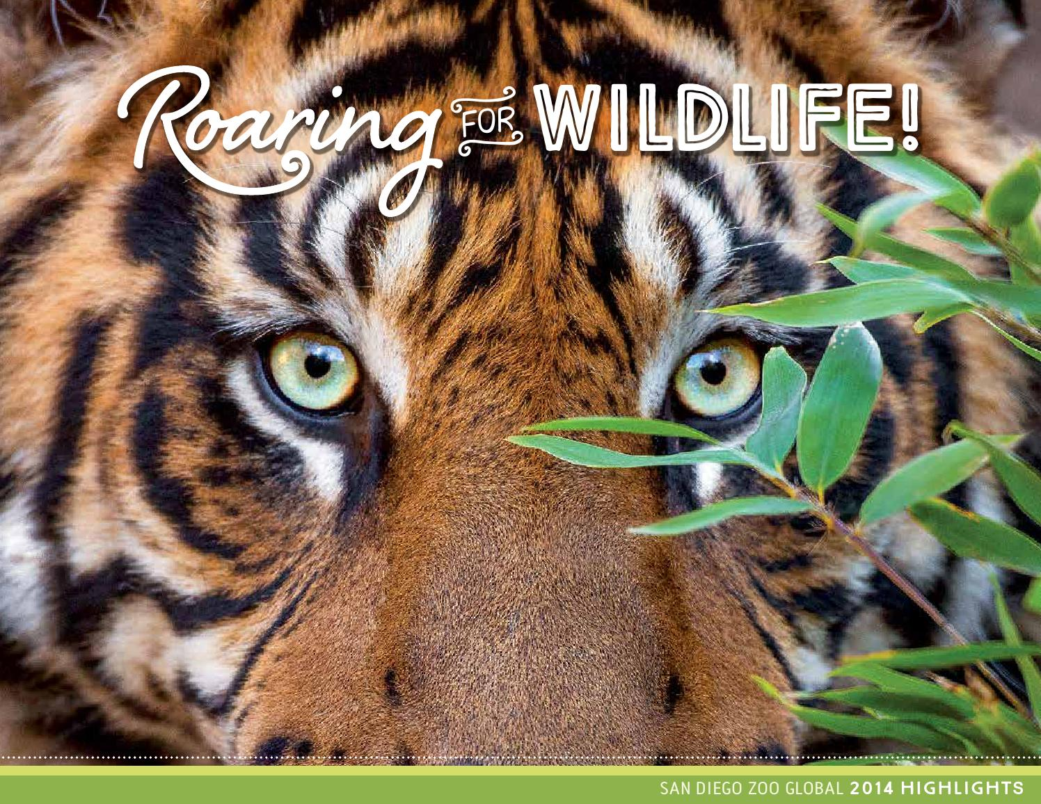 Roaring For Wildlife By San Diego Zoo Global Issuu How To Build Nocturnal Animals Whisker