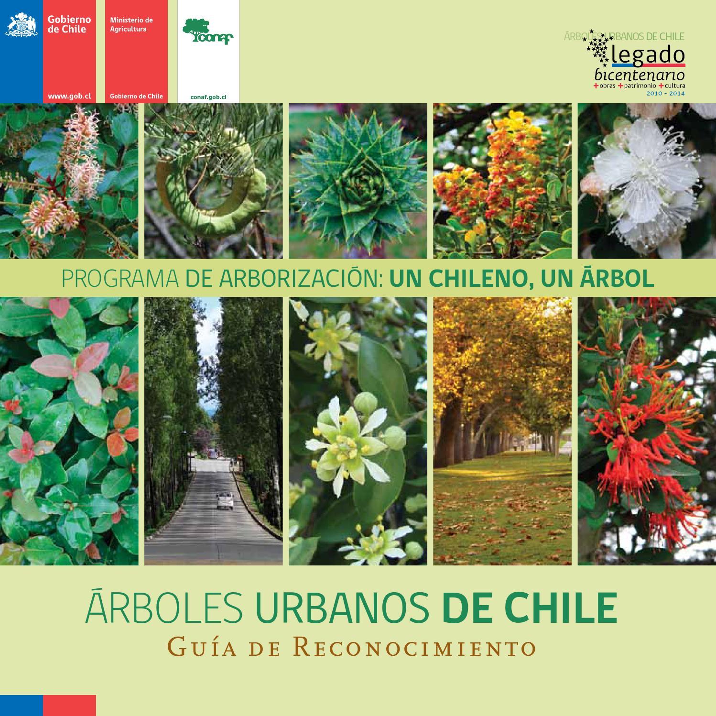 Árboles urbanos de Chile - Guía de reconocimiento by ...