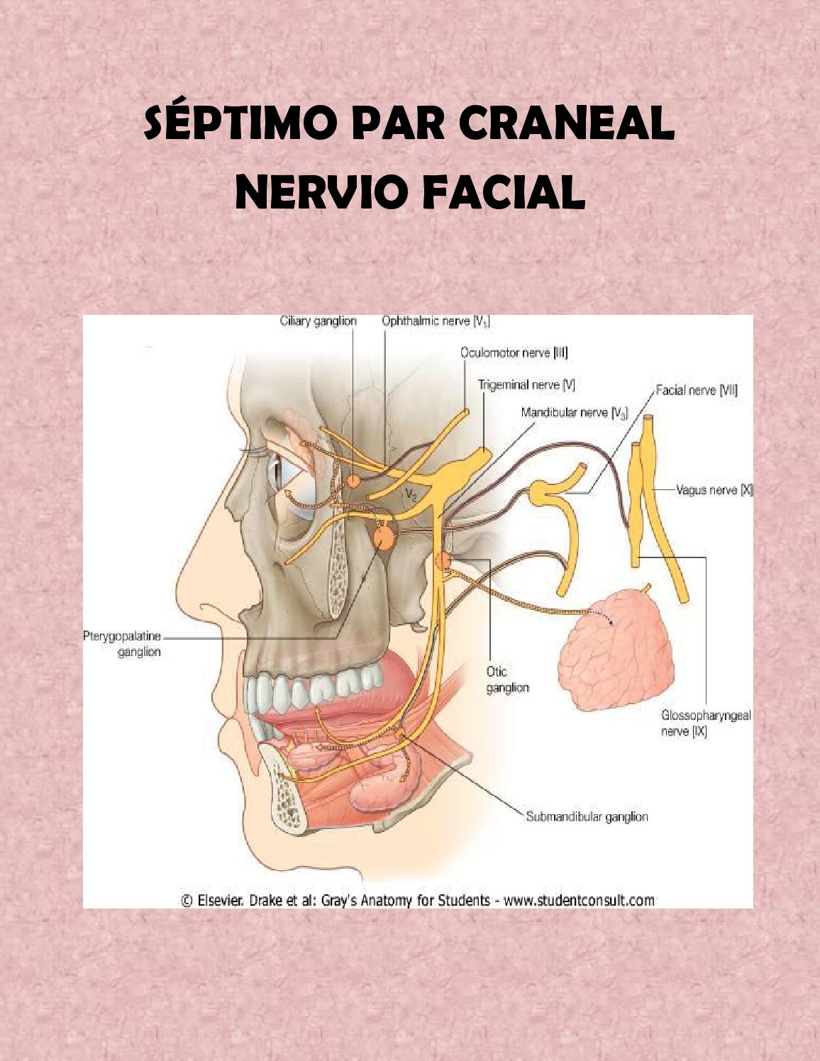 Séptimo par craneal docx (IPETH) by Ipeth DF - issuu