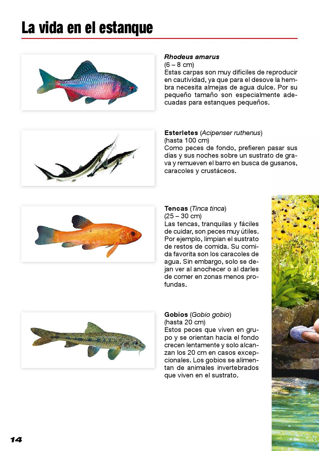 Mi estanque de jard n by la magia de los peces for Peces en estanques pequenos