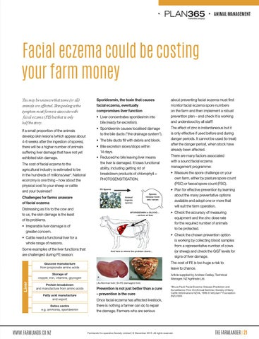 Preventing facial eczema in sheep excellent