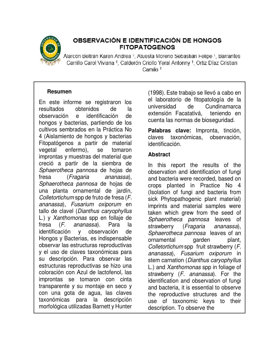 Observación E Identificación De Hongos Fitopatogenos By