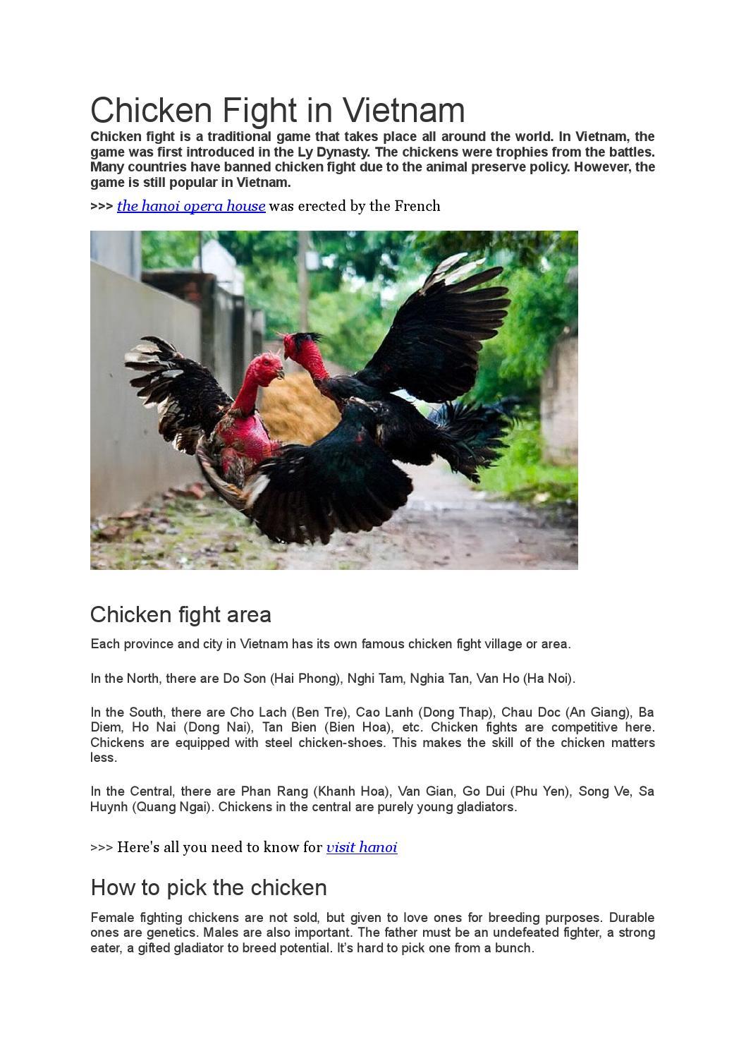 Chicken fight in vietnam by haphuonginet - issuu