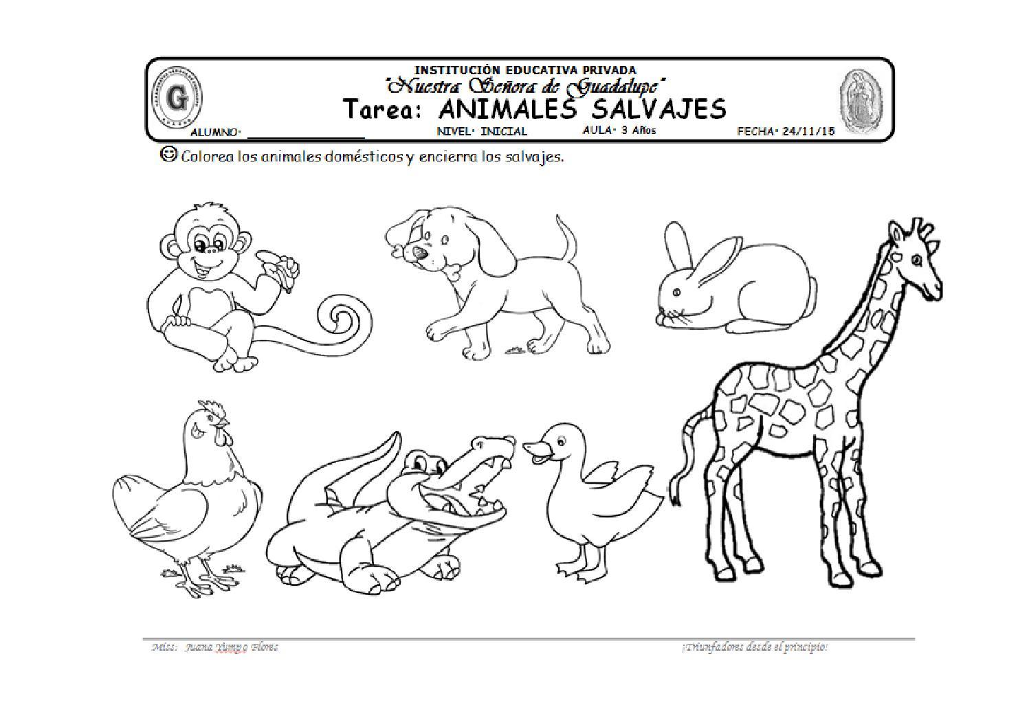 Imagenes De Animales Carnivoros Para Colorear: Tarea Salvajes By Marivel Yumpo