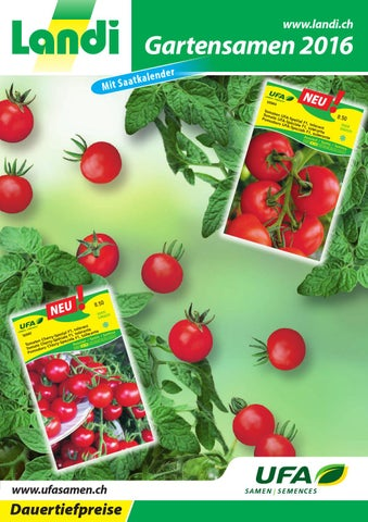 ca 10-15 Pflanzen Samen Saatgut Gemüse Aussaat Augergine Money Maker No 2 F1 f