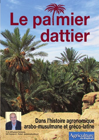 business plan palmier dattier