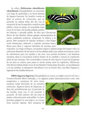 Insectos de Puerto Rico by Colección Puertorriqueña UPR RP - issuu