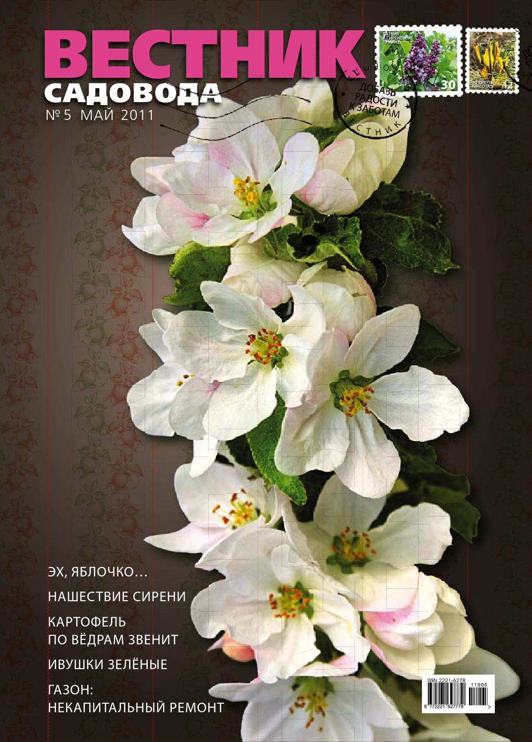 Обделена заслуженной популярностью морозостойкая яблоня Аркадик