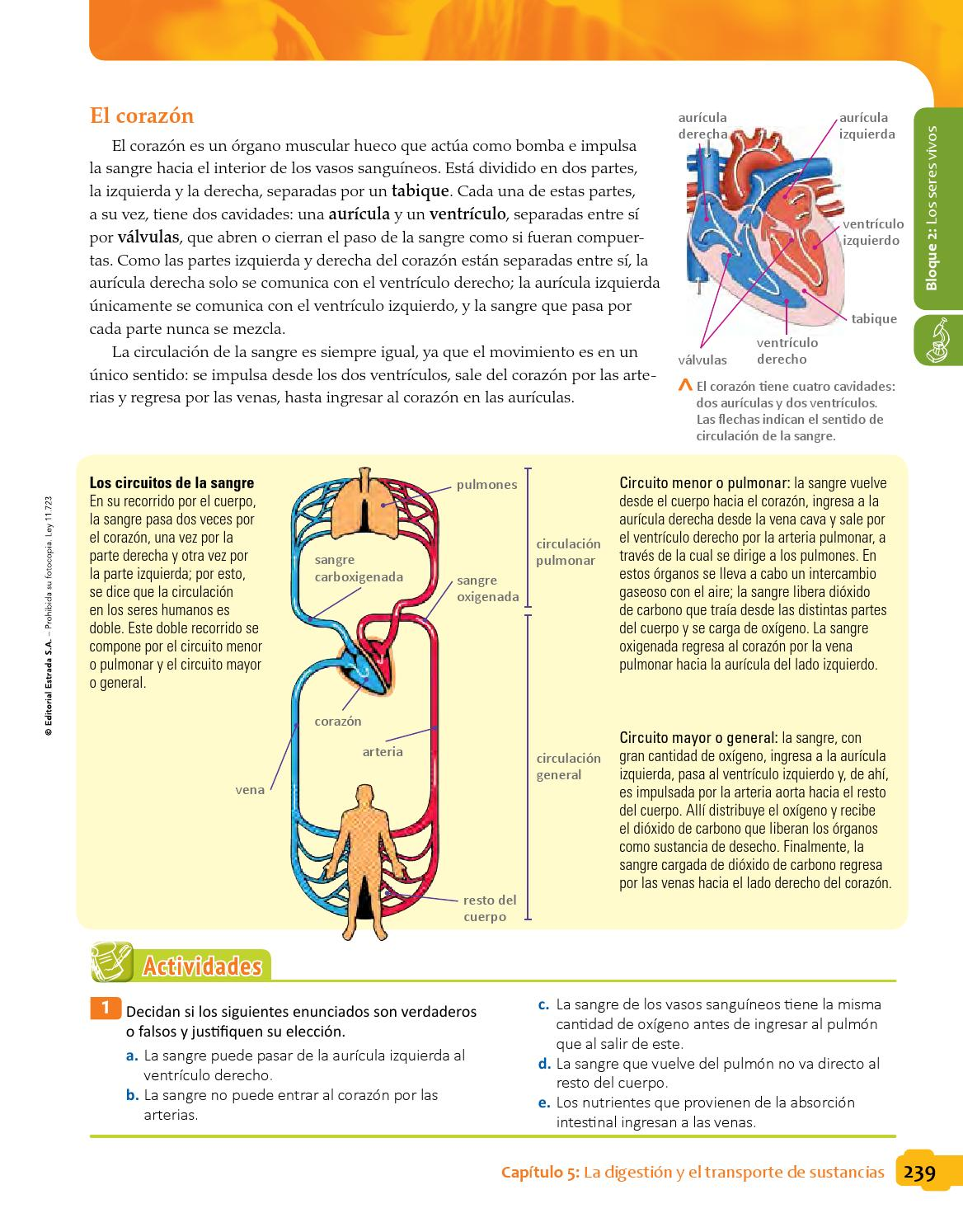 Circuito Sanguineo : Biciencias 6to bonaerense by macmillan publishers s.a. issuu