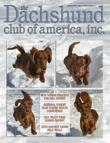 43b086fae Dachshund Club of America Winter 2015 Newsletter by Lynne Dahlen - issuu