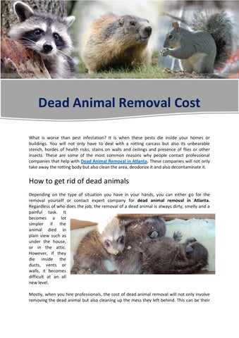 Dead Animal Removal Cost What Is Worse Than Pest Infestation It When These Pests Inside Your Homes Or Buildings You Will Not Only Have To Deal With