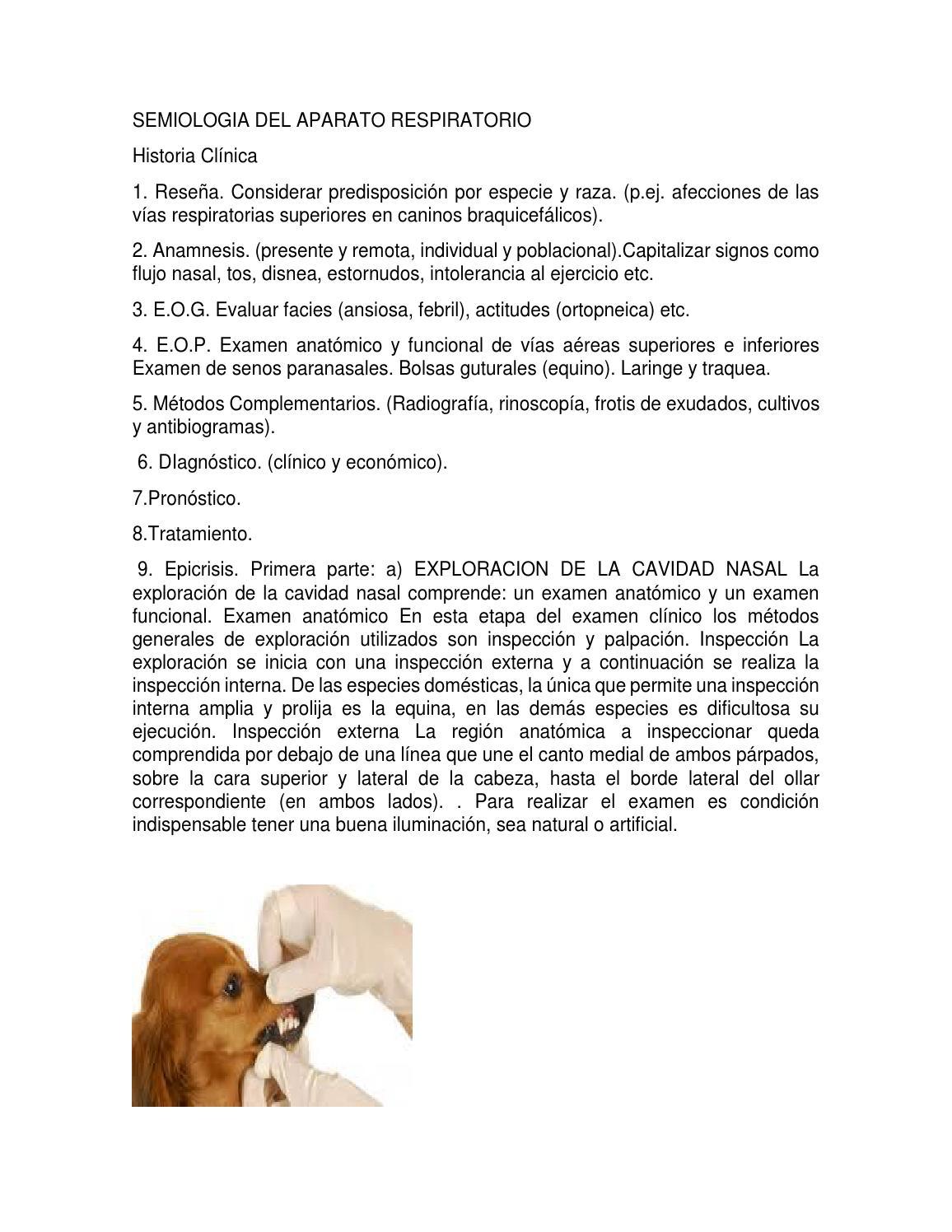 Semiologia del aparato respiratorio by jjmesa - issuu