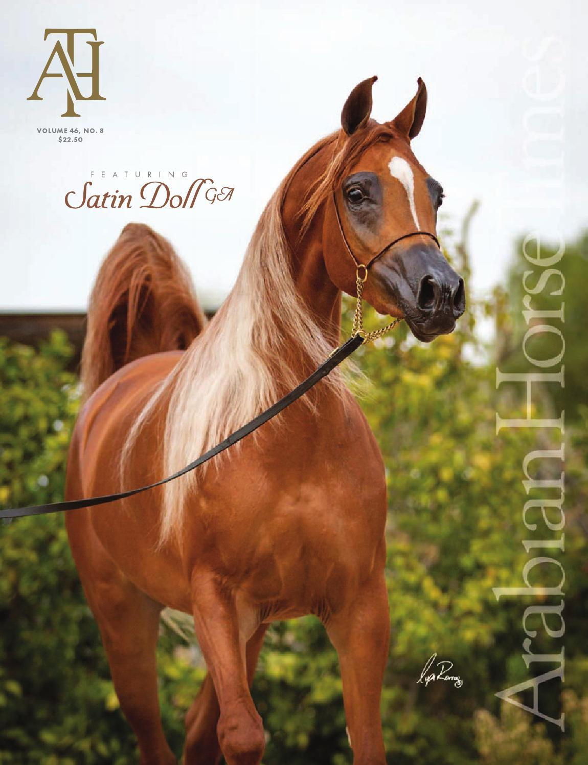 Vol46 No8 Arabian Horse Times By Arabian Horse Times Issuu