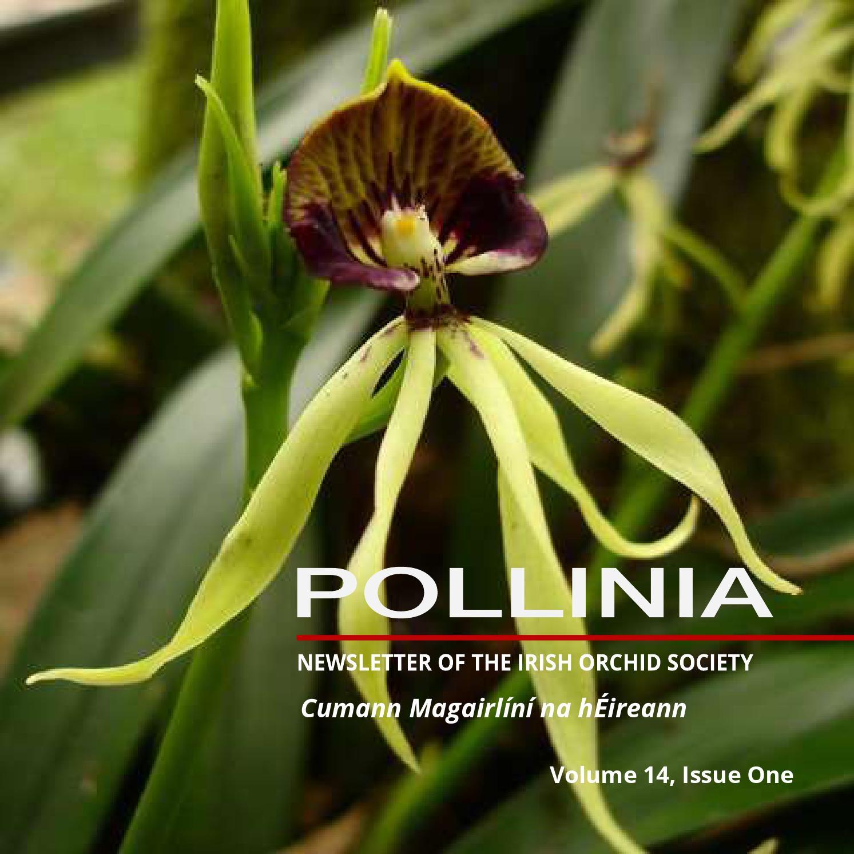 flora single menn)