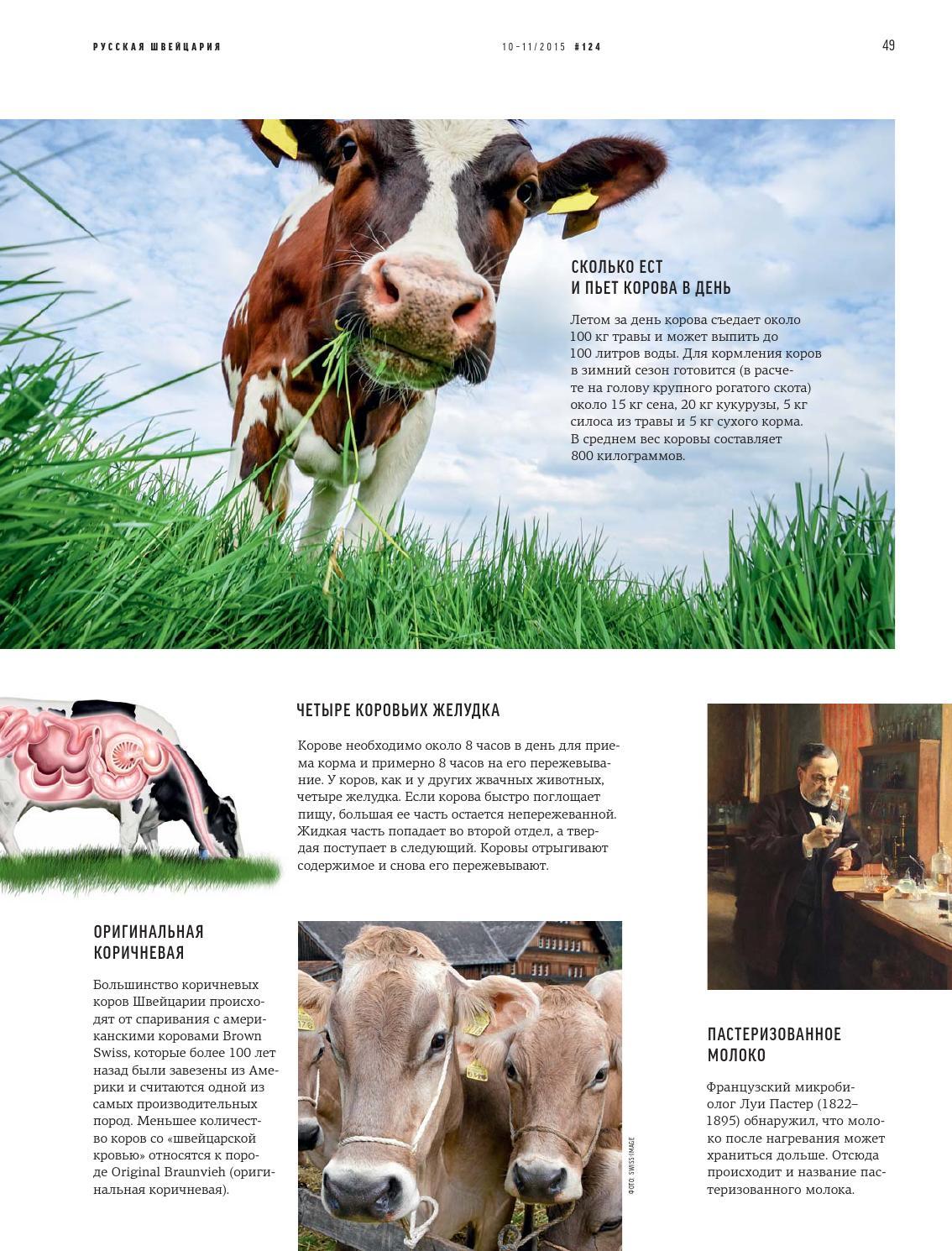 Бельгийская голубая и русская комолая мясные породы коров | 1490x1134