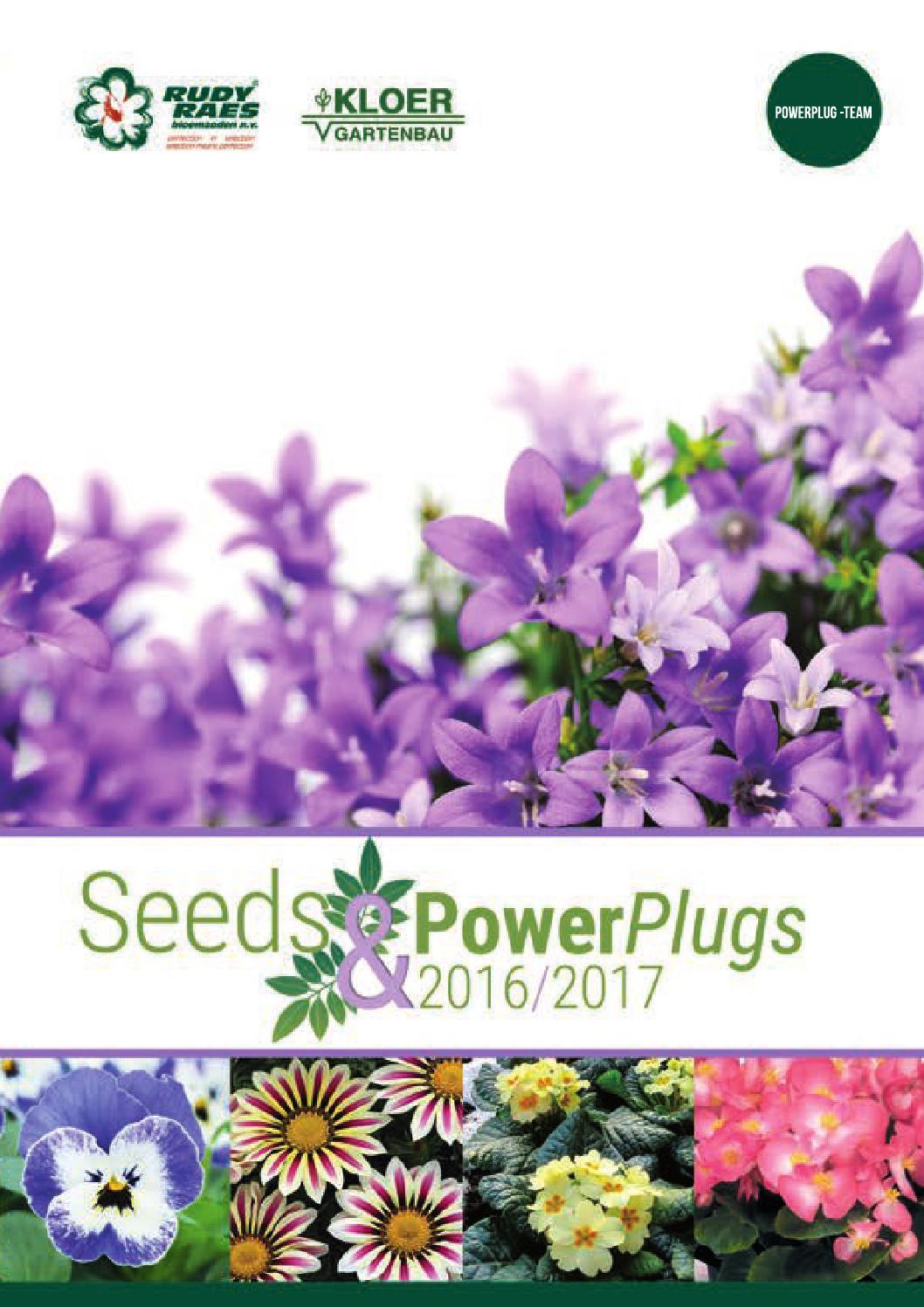 Flower 75 Seeds Erysimum linifolium Little Kiss Lilac