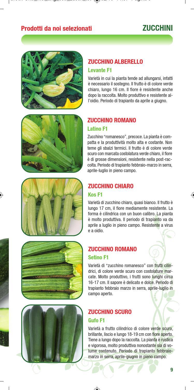 Varietà Zucchine Da Fiore angurie-meloni-cetrioli by orto1 - issuu