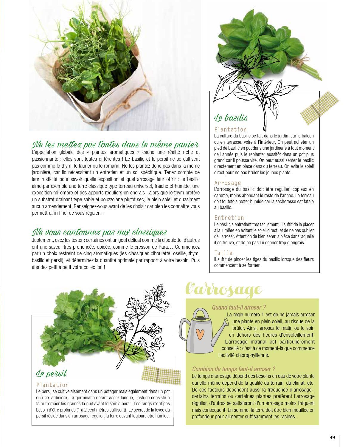 Planter Herbes Aromatiques Jardiniere bien vivre guadeloupe édition mars 2016bien vivre - issuu