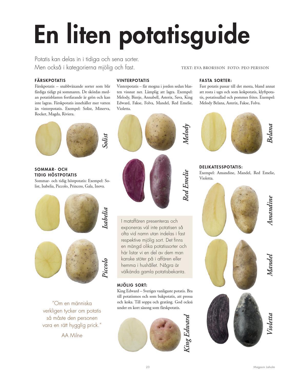 belana potatis