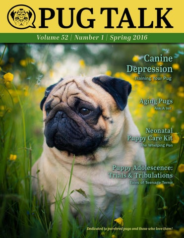 Pug Talk Spring 2016 By Pug Talk Issuu