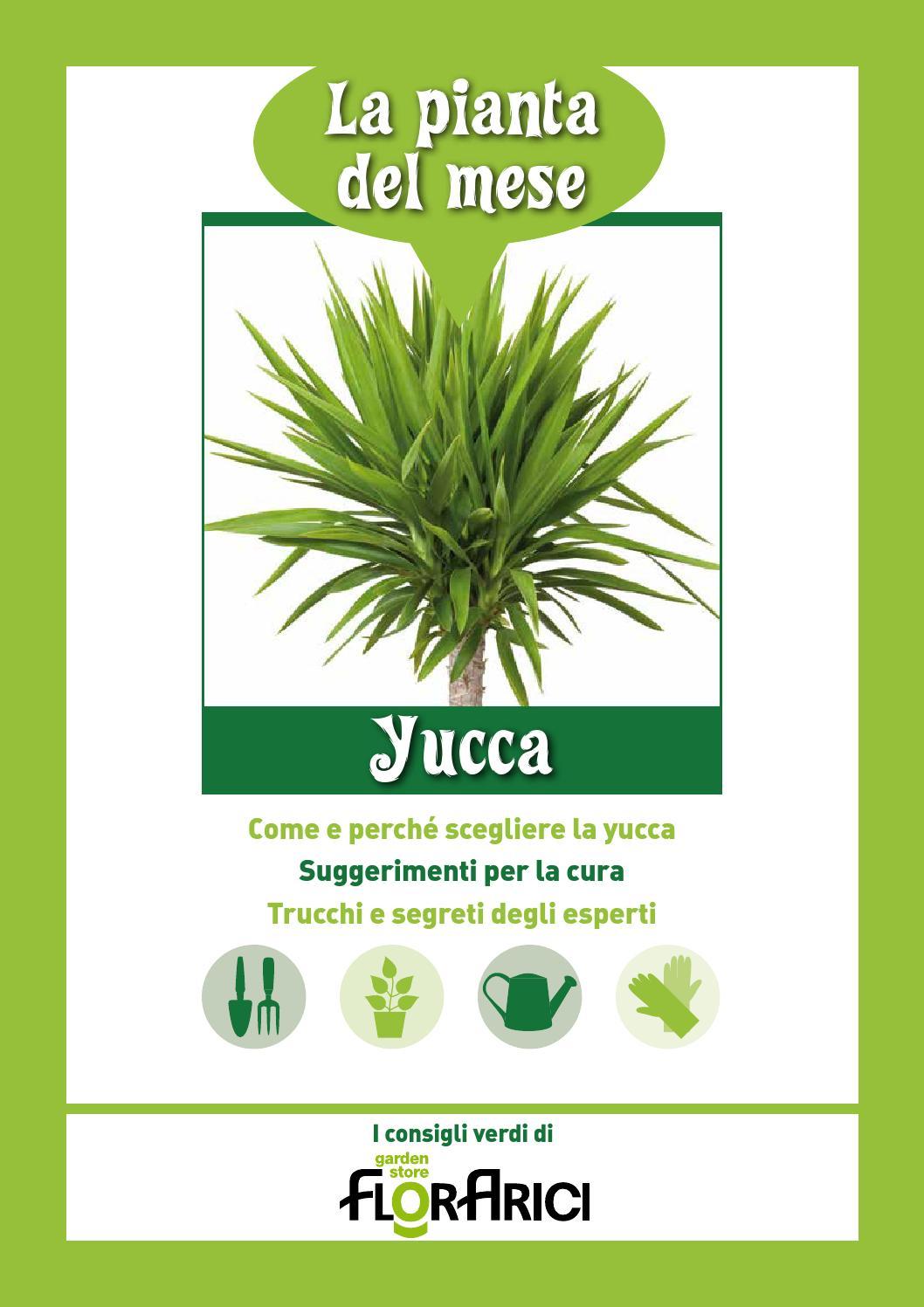 Tronchetto Della Felicità Da Esterno yucca - la pianta del mese di aprile 2016 di florarici by