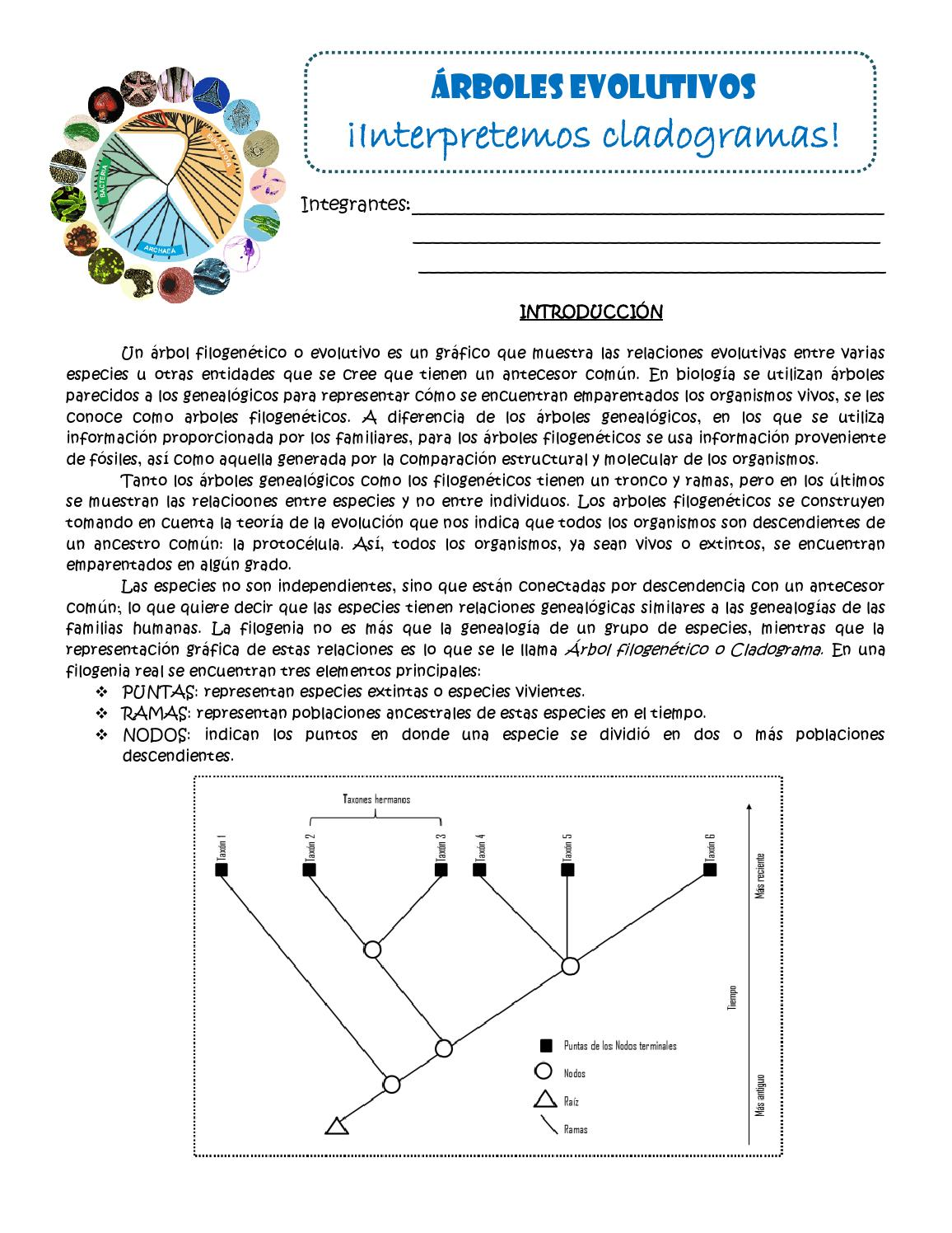 Practica de Evolución_4to Año_CCR by Yenliz Josephine Serrano ...